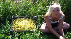 Heather harvesting french filet yellow beans