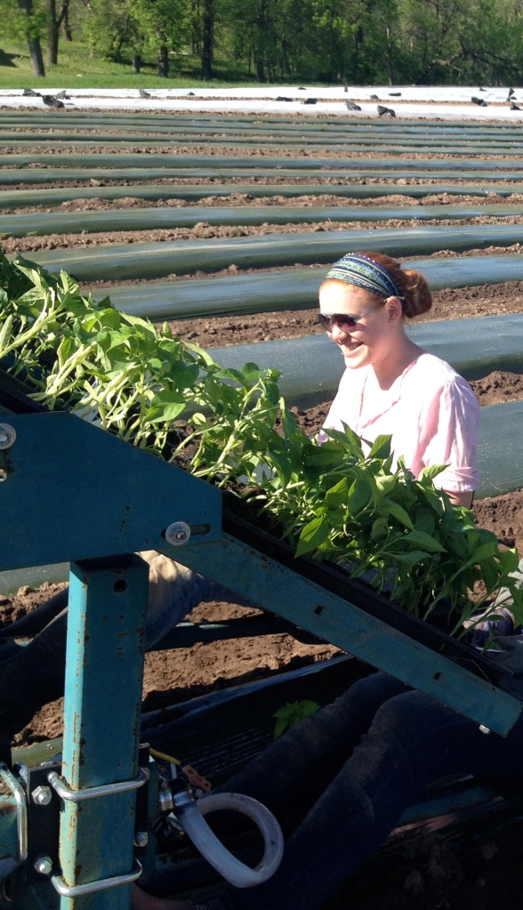 megan working the transplanter with peppers on board