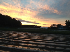 sunset over melons